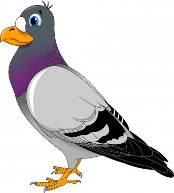 Pigeon  bird illustration