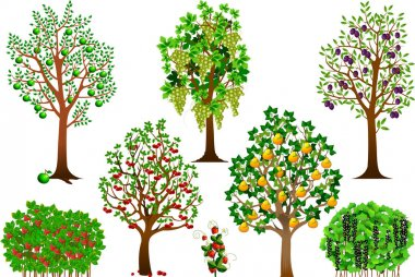 Collection of fruit trees, bushes and berries, vector and illustration, vector illustration stock vector
