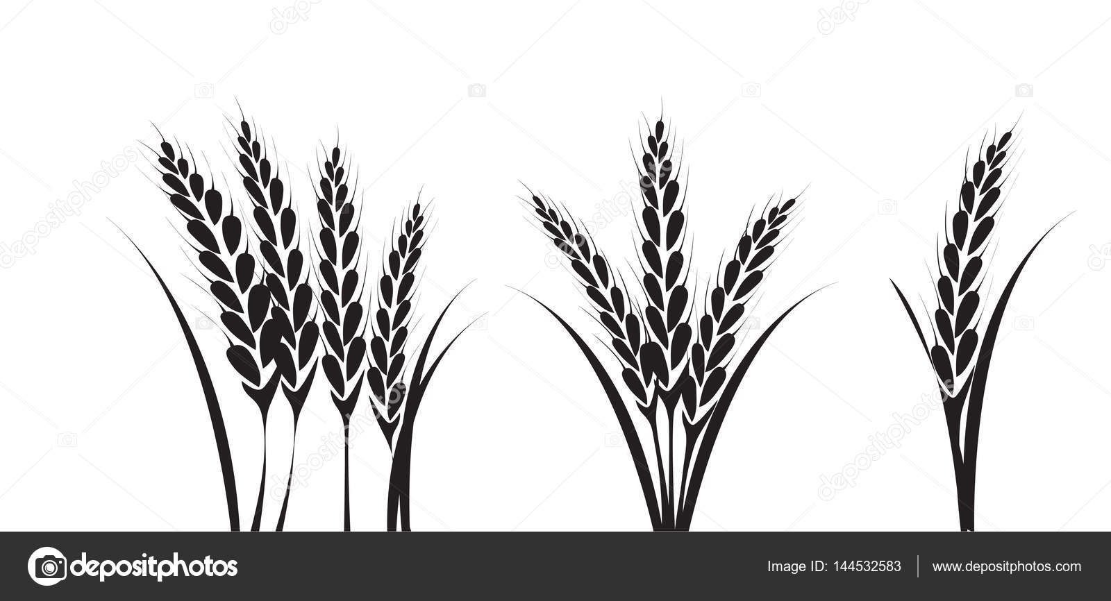 corn or wheat silhouette drawings — Stock Vector ...