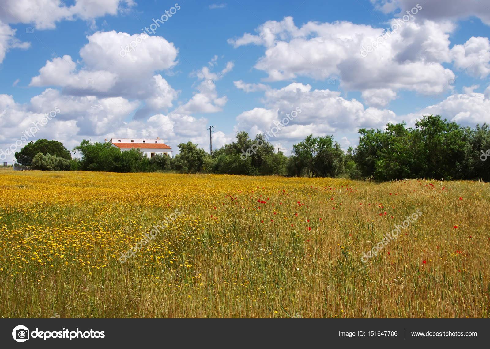 Flores Silvestres Em Campo Na Regiao Do Alentejo Portugal
