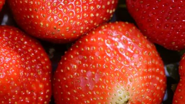 Berry zahradní jahody