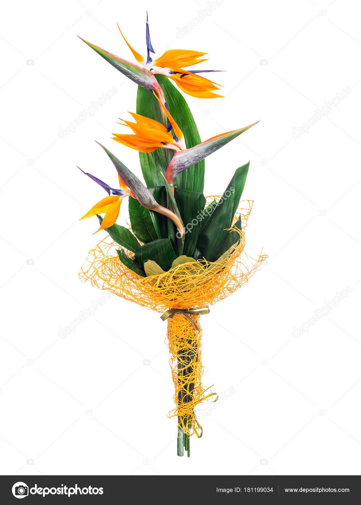 Bird of paradise bouquet — Stock Photo © vankad #181199034