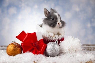 Funny bunny and Christmas background