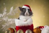 Vánoční zajíček v santa hat