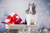 Funny bunny a Vánoční pozadí
