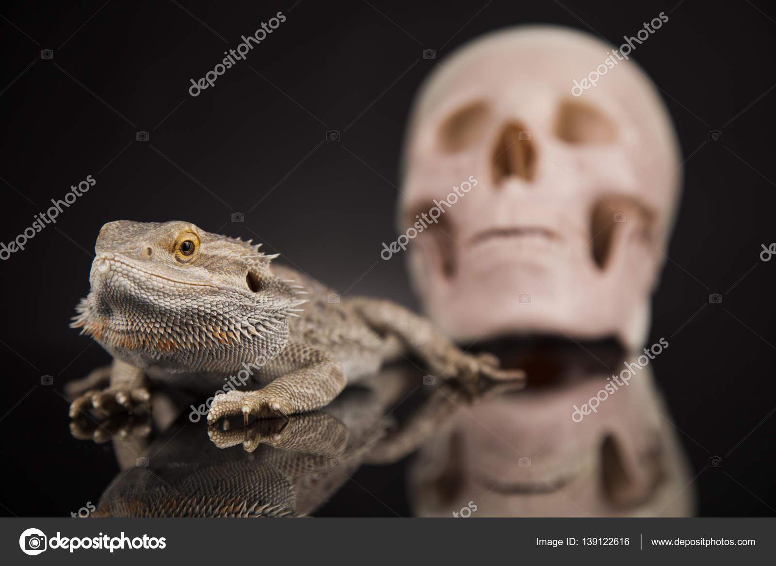 Eidechse mit menschlichen Schädel — Stockfoto © JanPietruszka #139122616