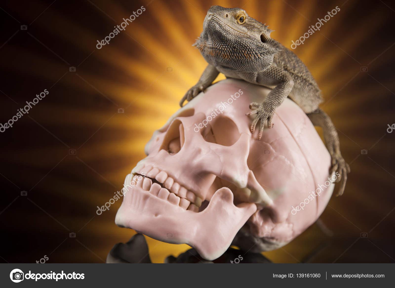Eidechse mit menschlichen Schädel — Stockfoto © JanPietruszka #139161060