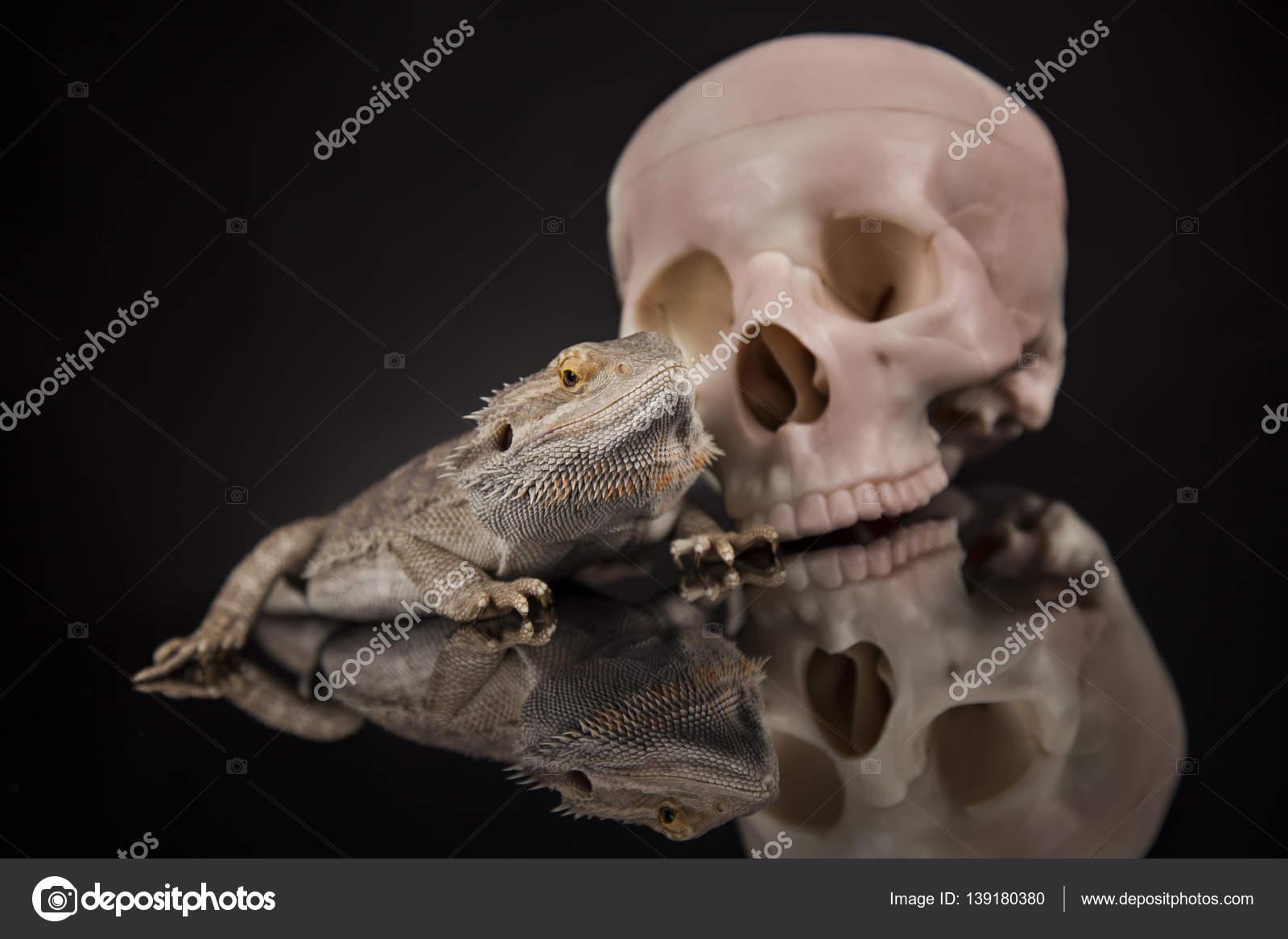 Eidechse mit menschlichen Schädel — Stockfoto © JanPietruszka #139180380