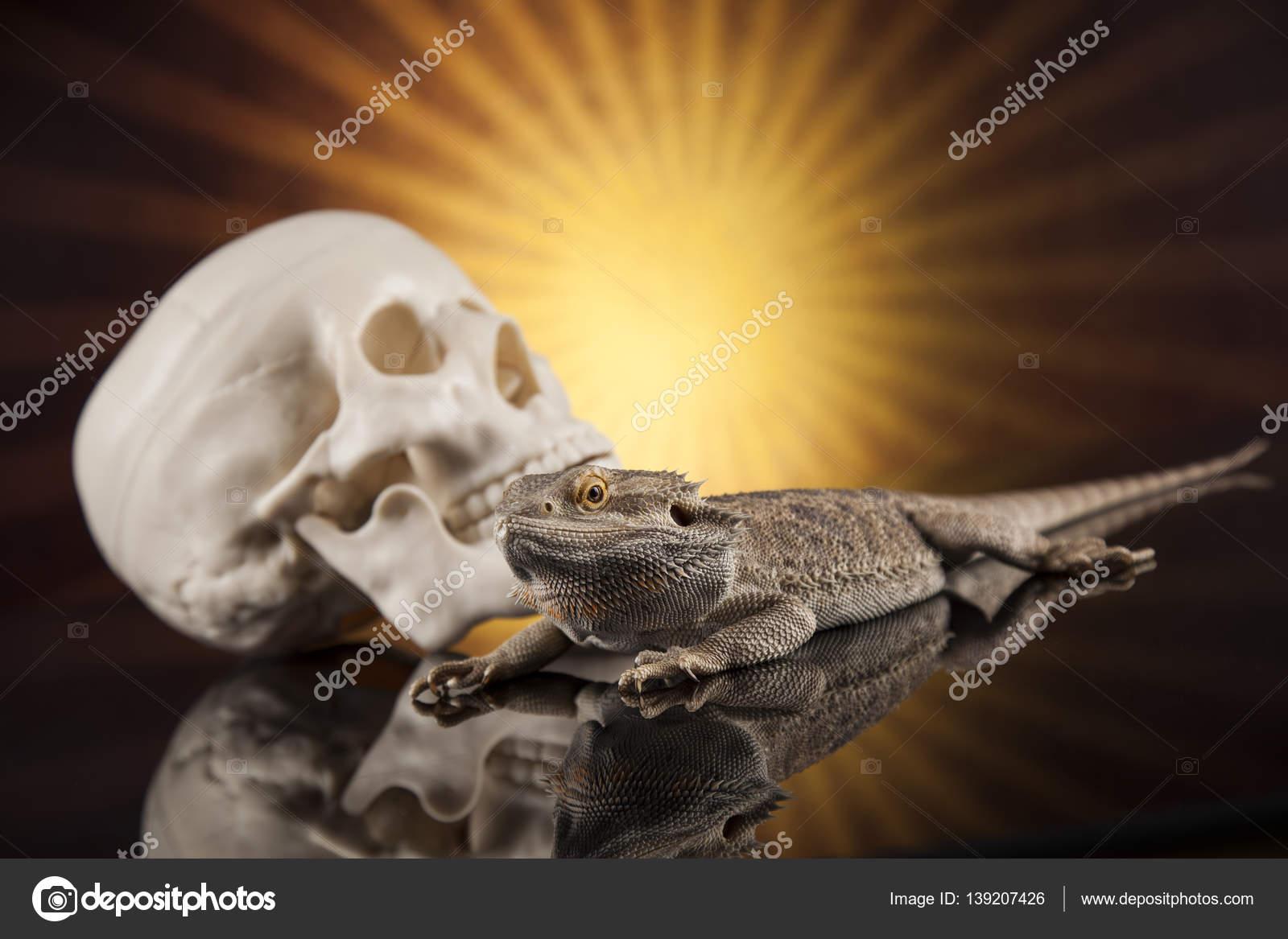 Eidechse mit menschlichen Schädel — Stockfoto © JanPietruszka #139207426