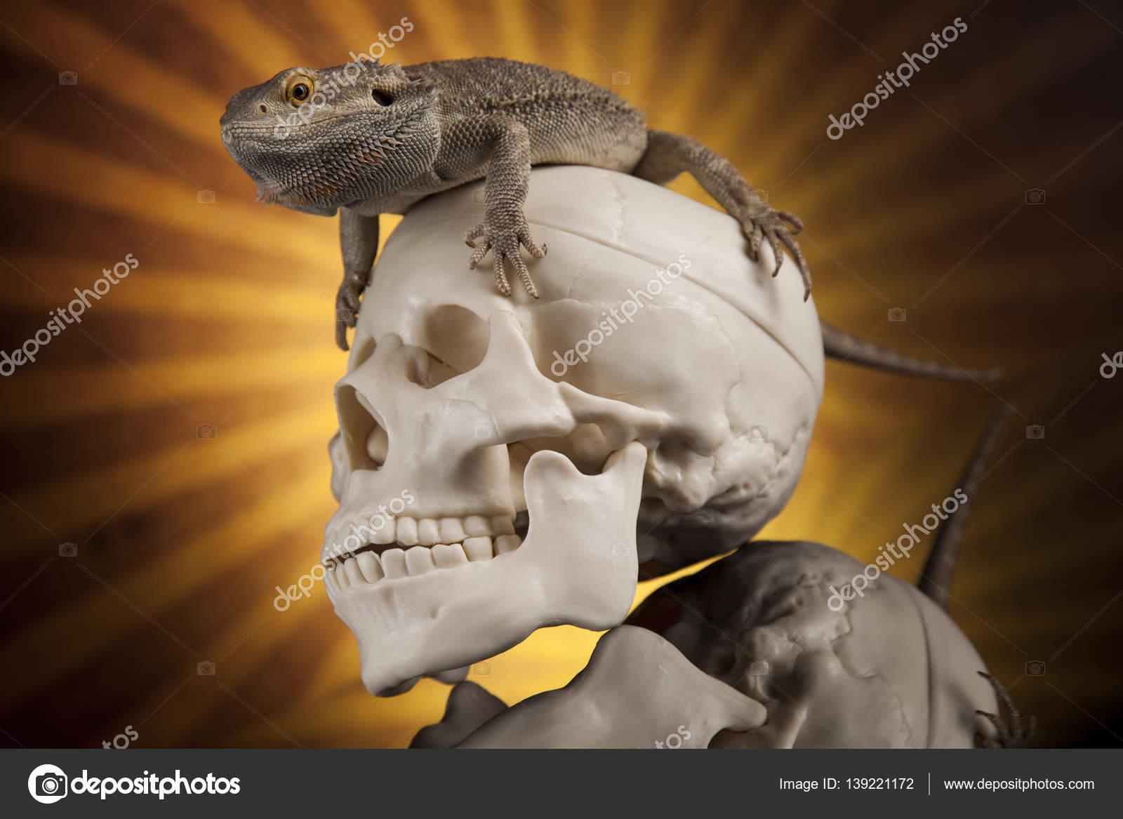 Eidechse mit menschlichen Schädel — Stockfoto © JanPietruszka #139221172