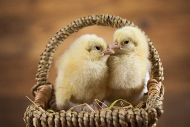 Easter animals chicks
