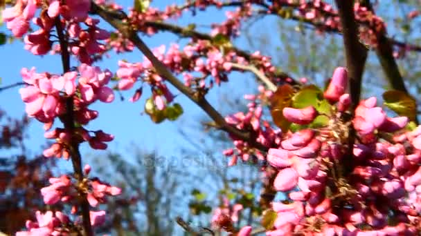 Pink Flower Blossoms In Spring