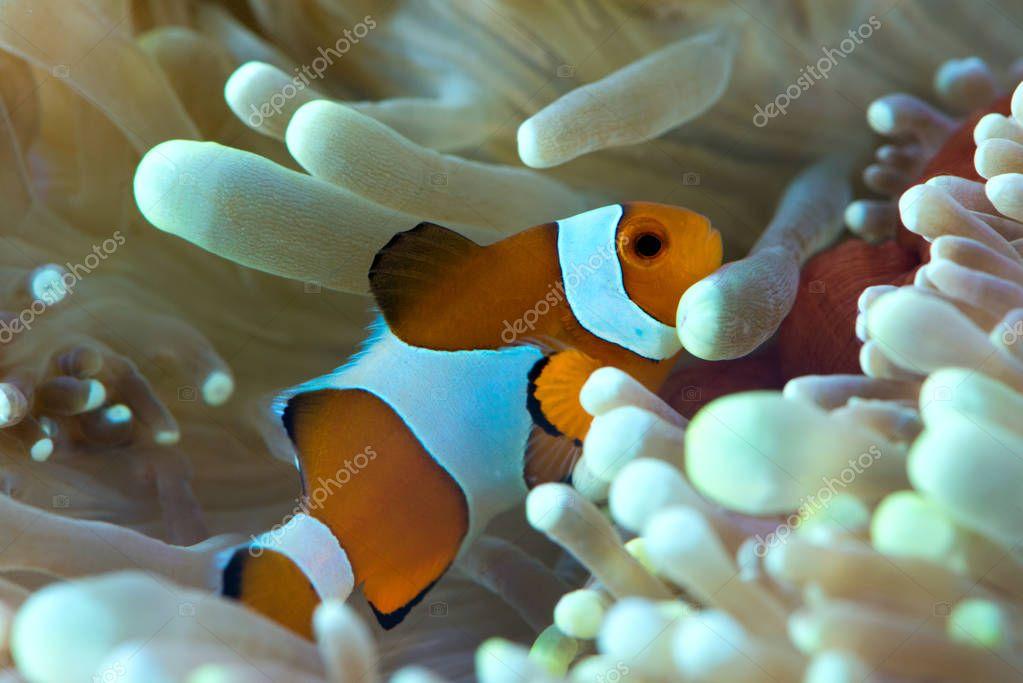 fish floating near anemone reef