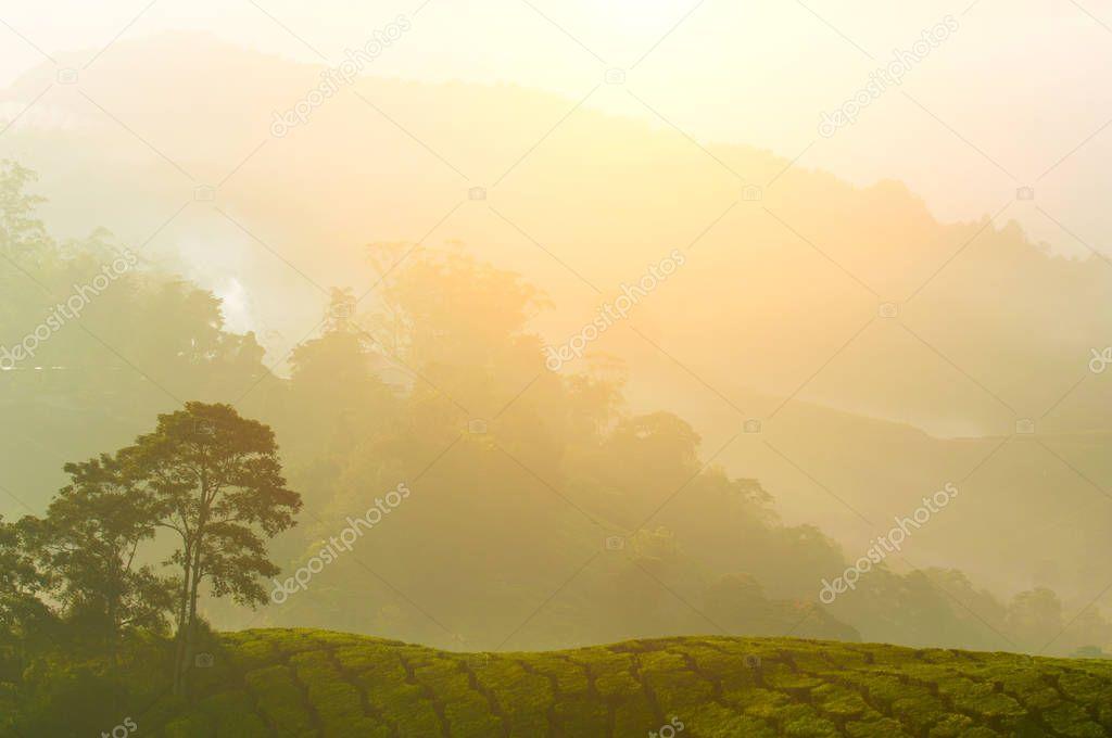 morning at cameron highlands