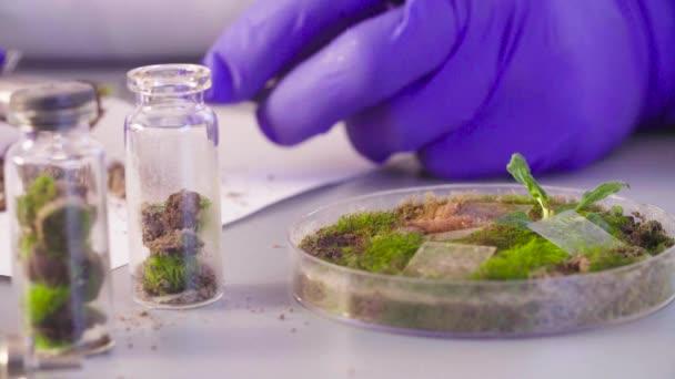 A tudós vesz ki a mintát a petri-csészében.
