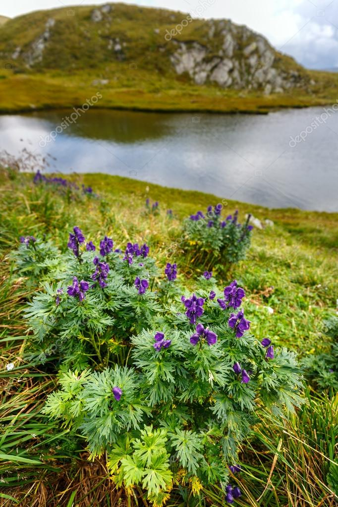 Mountain flowers by lake