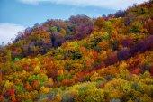 Fotografie Les s listnatými stromy
