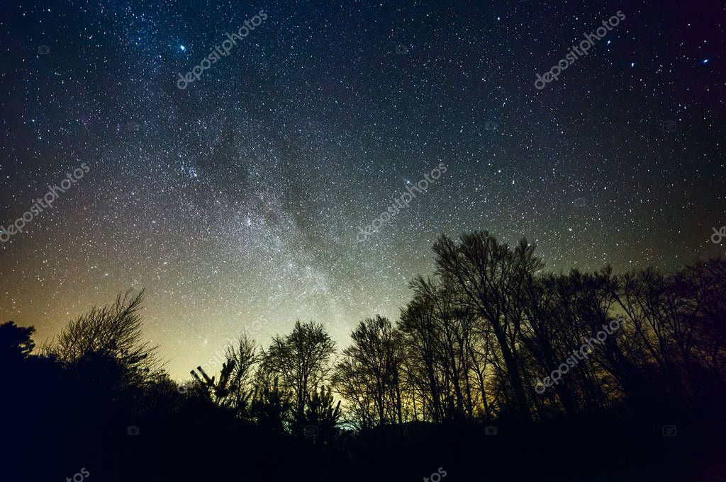 Starry night over forest
