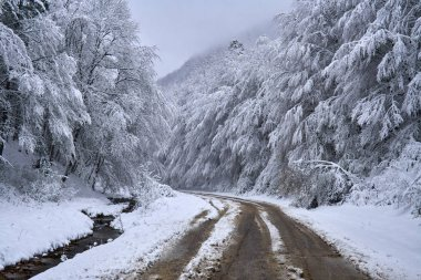 Ormanı karlı yol