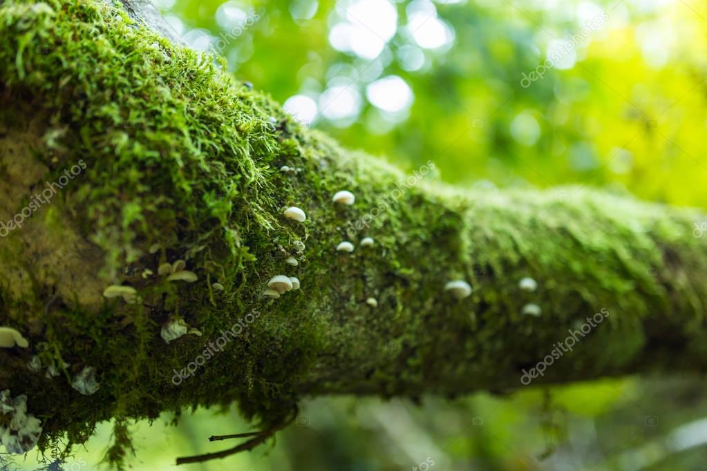 Tree bark covered in moss
