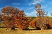 krásné podzimní krajina