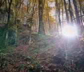 Les v podzimní ráno