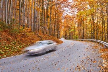 Car speeding through forest