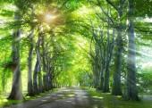 Fotografia Strada attraverso la foresta. Fondo della natura con alberi di verde di estate