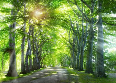 Way through the forest. Nature background with green summer trees.