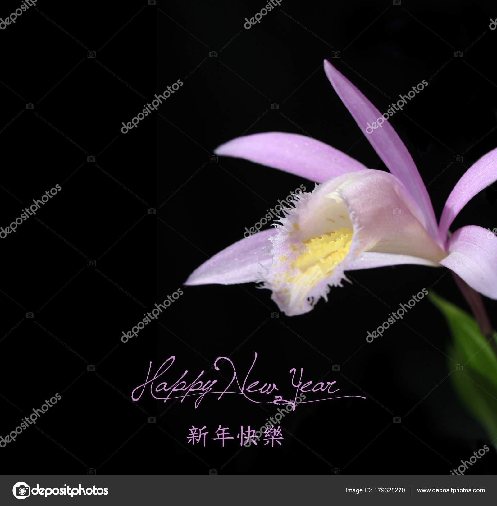 chinese new year background with flower stock photo