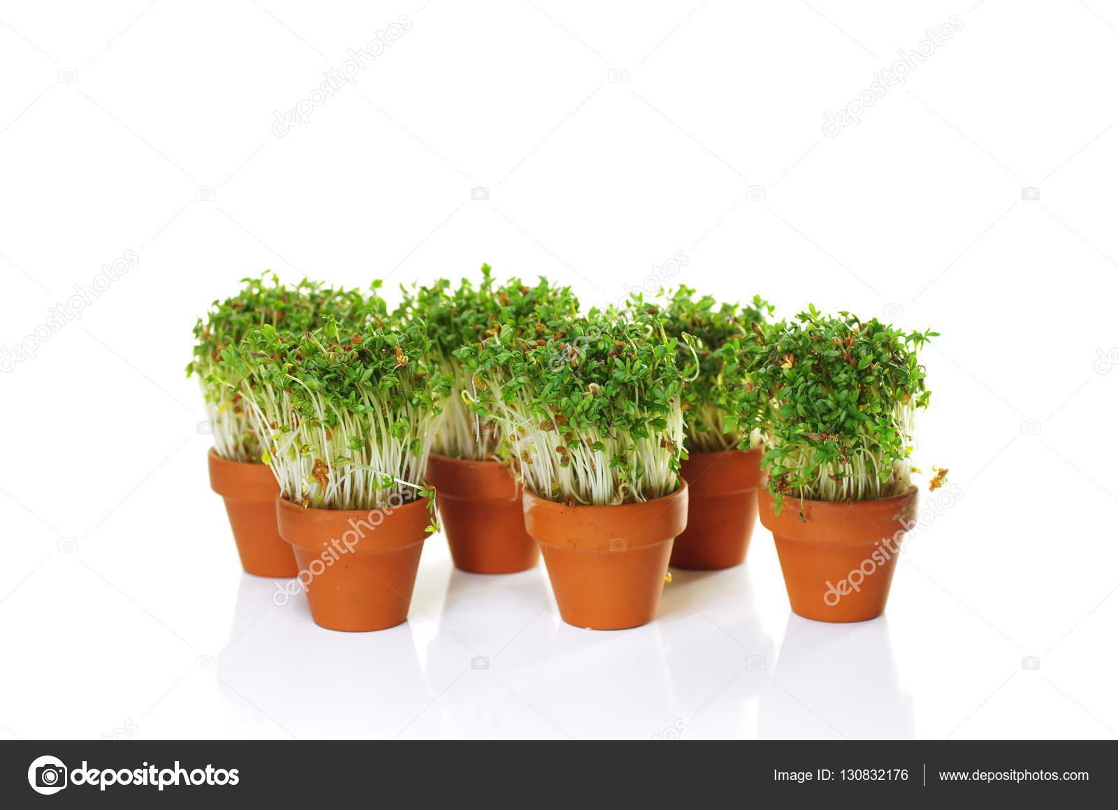 Посадка картофеля: какое удобрение добавлять в лунку
