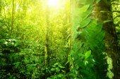 Přírodní tropické džungle