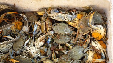 Blue Crabs in Crate