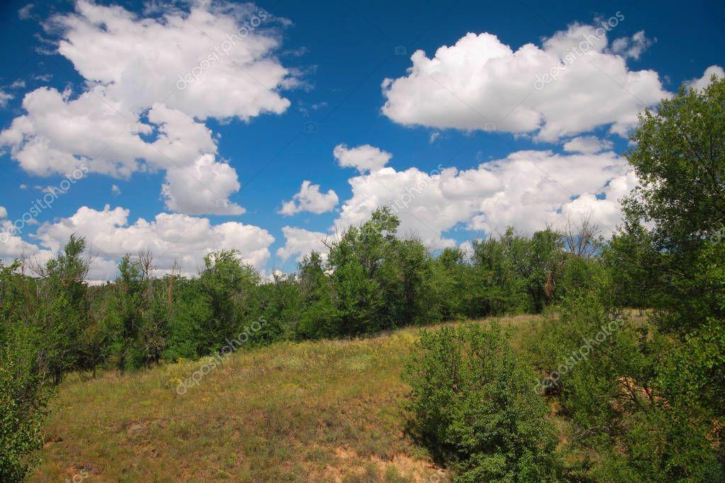 Rural landscape, forest-steppe