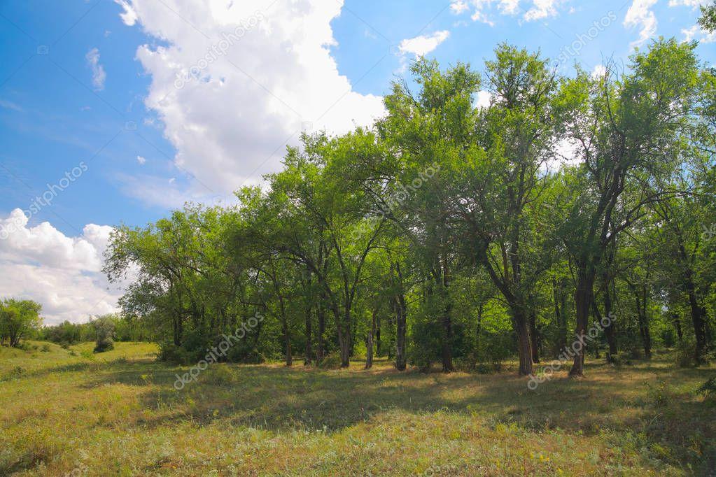 Natural landscape in summer