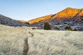 sentiero di bestiame presso Red Mountain Open Space