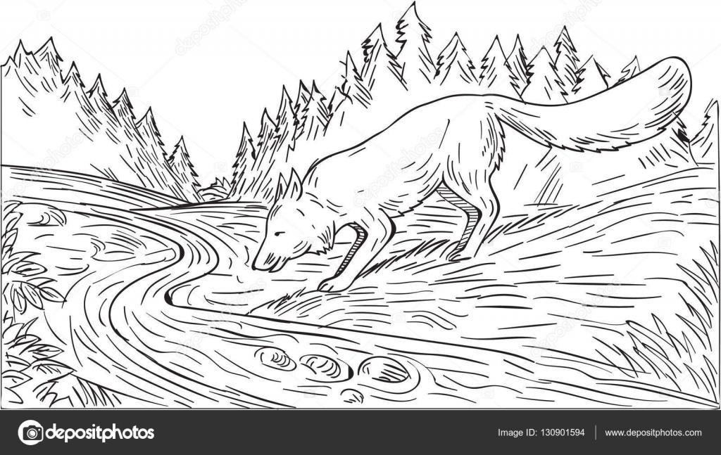 Fox beber río bosque dibujo blanco y negro — Vector de stock ...