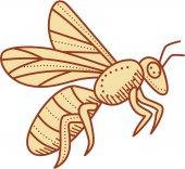 Fényképek Bee repülő Mono vonal
