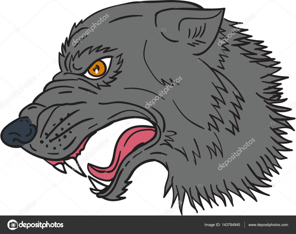 Grey Wolf Head Growling Drawing €� Stock Vector #143784945