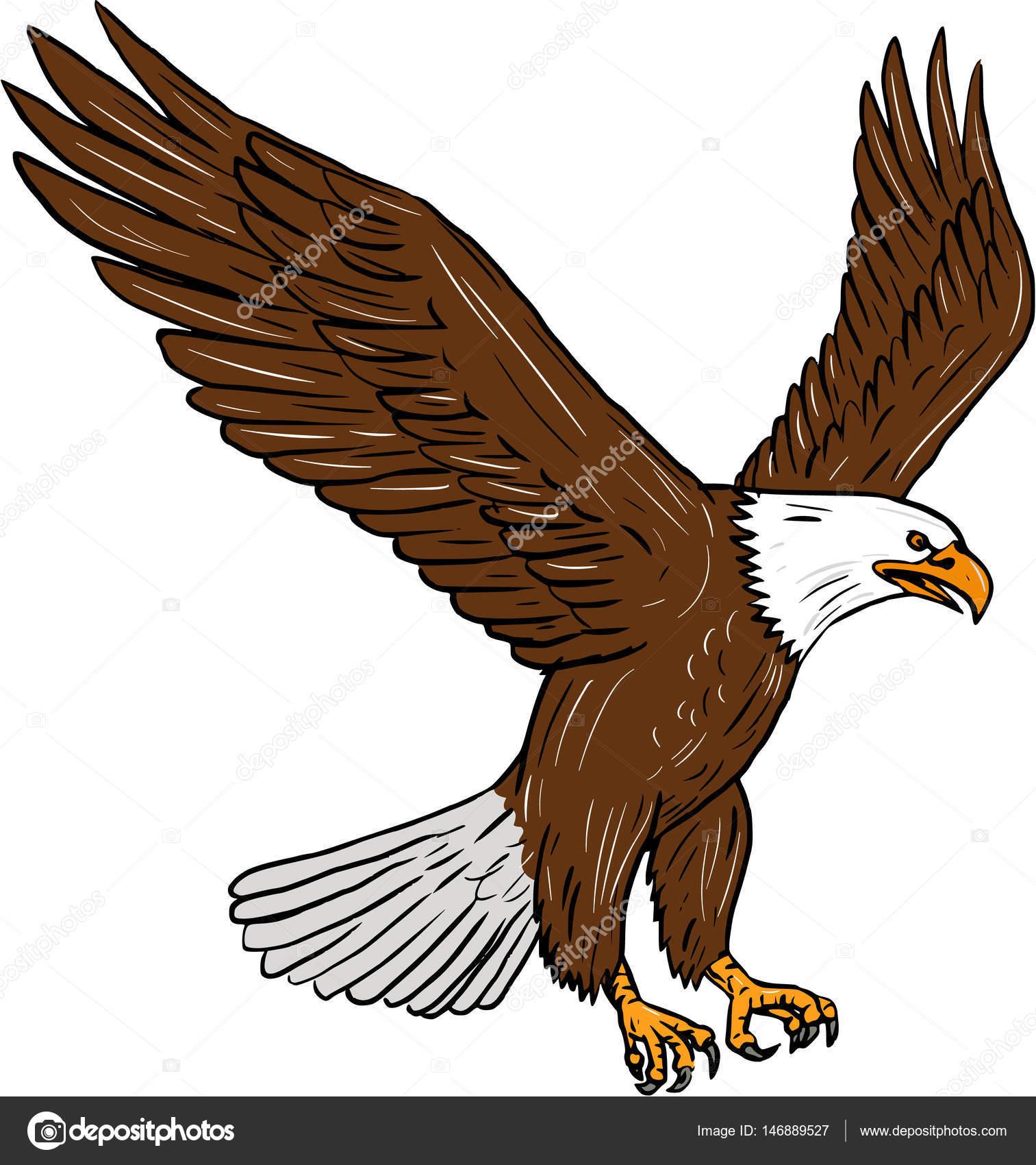 Águila calva volando dibujo — Vector de stock © patrimonio #146889527