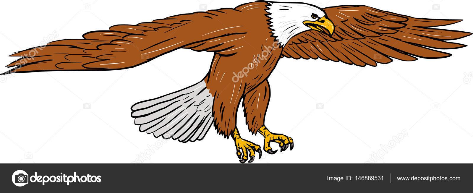 Dibujo de águila calva Swooping — Vector de stock © patrimonio ...