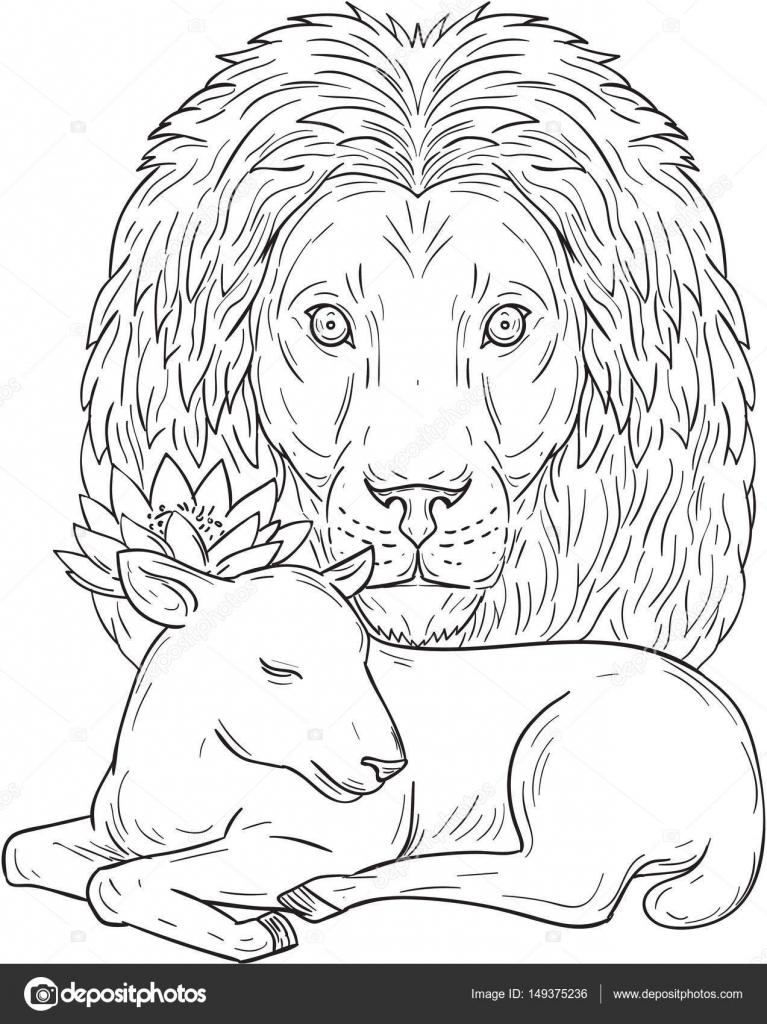León vigilando durmiendo dibujo de cordero — Archivo Imágenes ...
