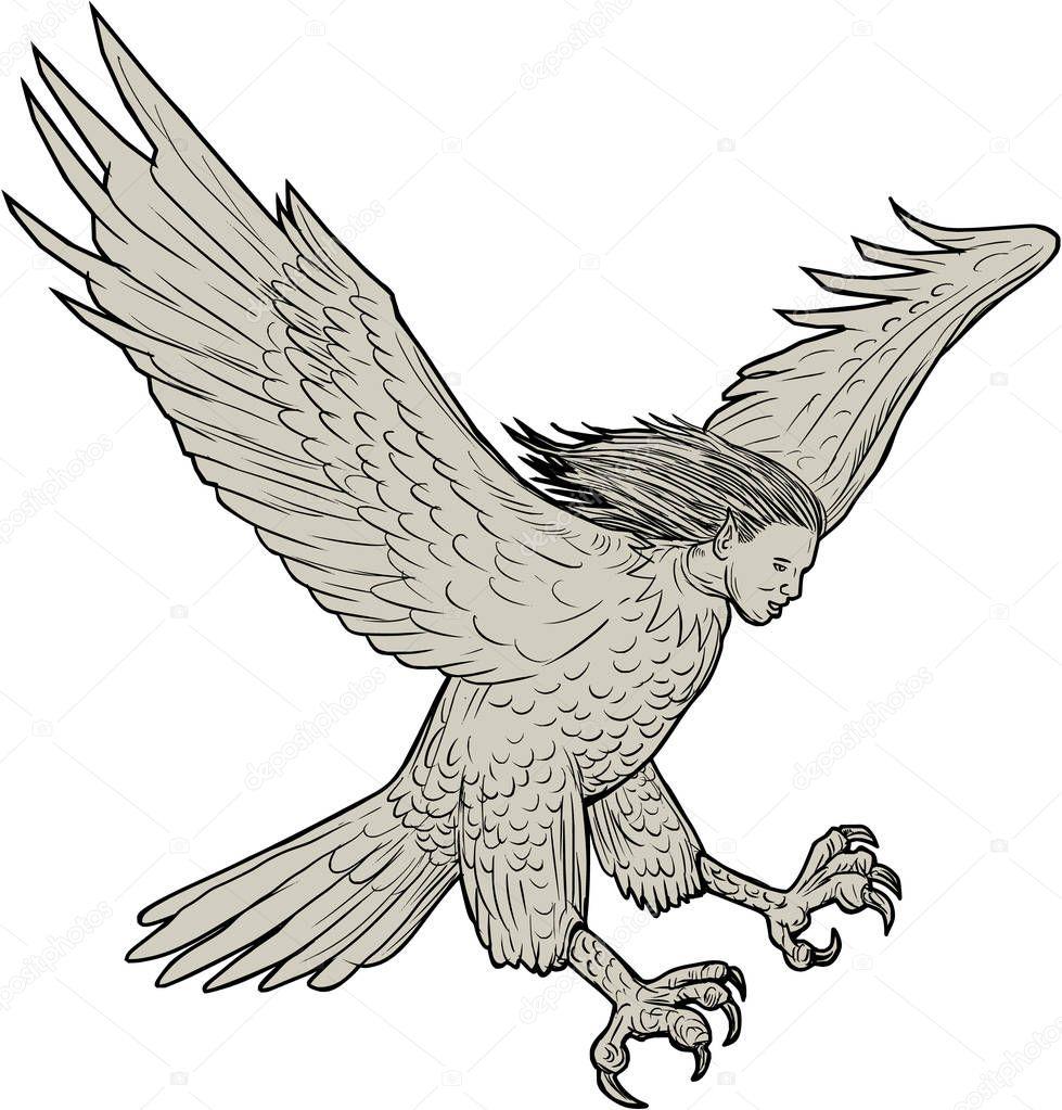 Harpia Swooping desenho — Vetor de Stock © patrimonio ... (979 x 1023 Pixel)