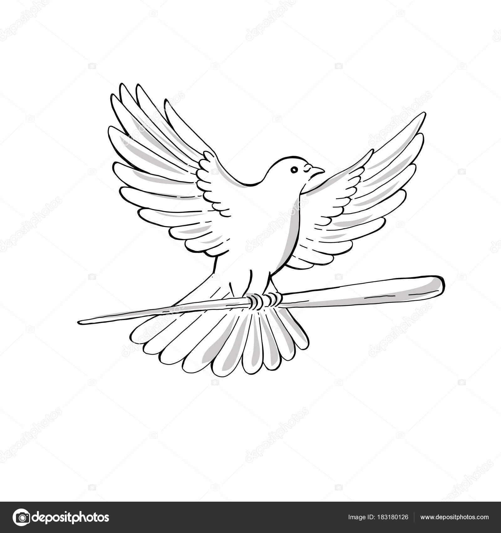 Manos Agarrando Una Paloma Paloma O Paloma Volando Con El Dibujo