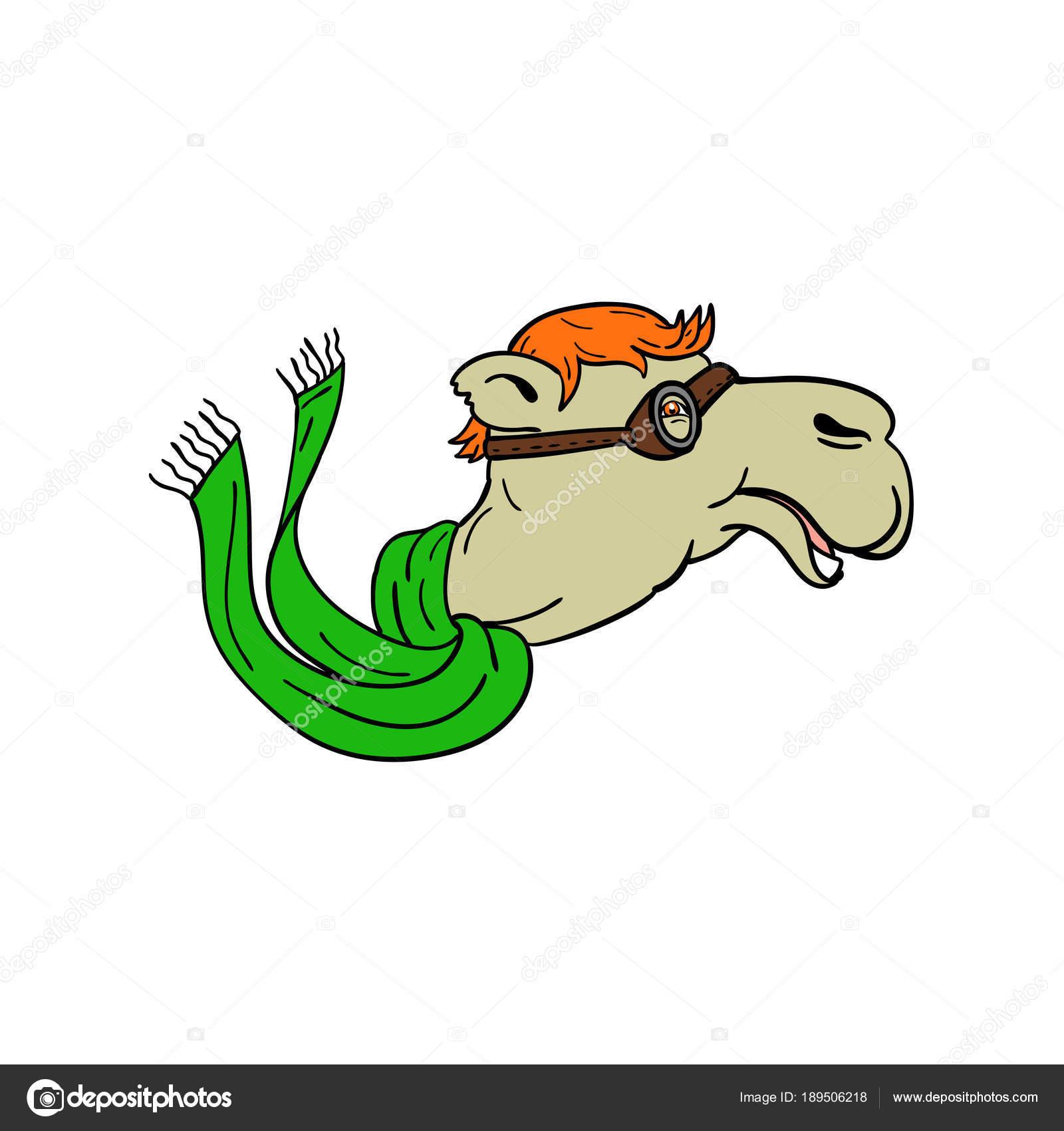 Ilustración del icono de la mascota de un camello llevando gafas de aviador  guerra mundial y que fluye de la bufanda verde de lado sobre fondo aislado  en ... b53255a467a