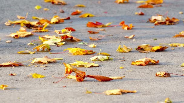 Autumn leaves being gently moved from the ground by the autumn wind