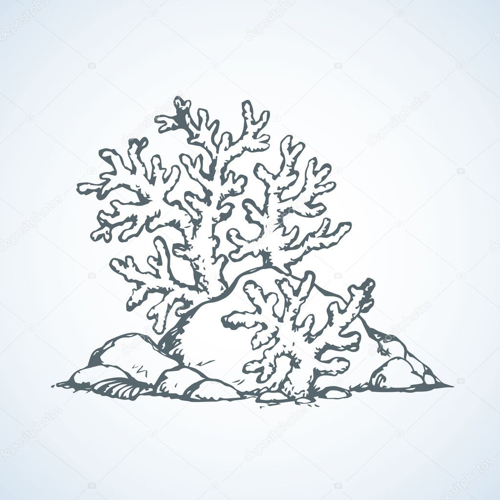 Corals of stones vector drawing stock vector marinka for Disegni coralli marini
