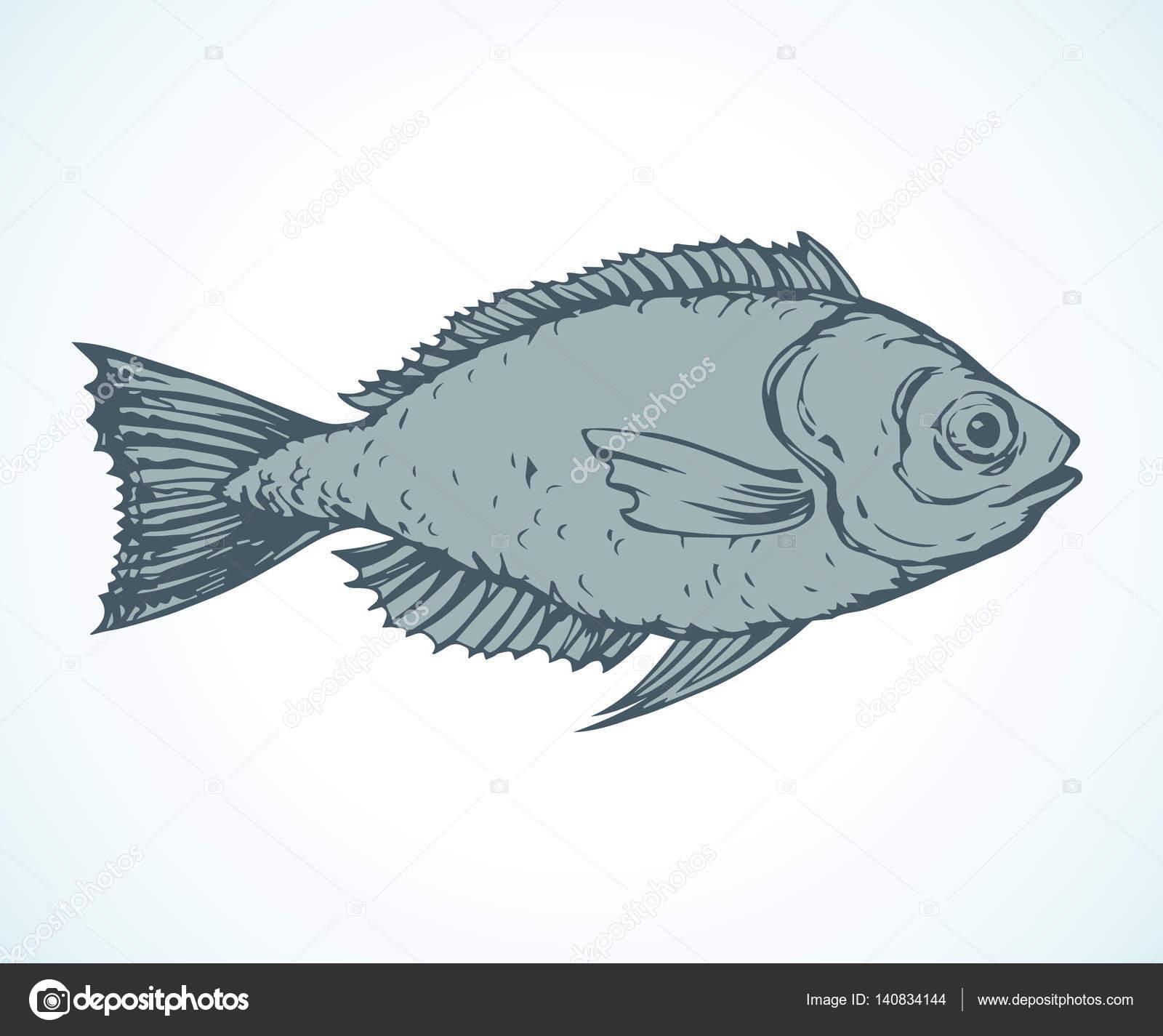 hand drawn sketch fish vector illustration u2014 stock vector
