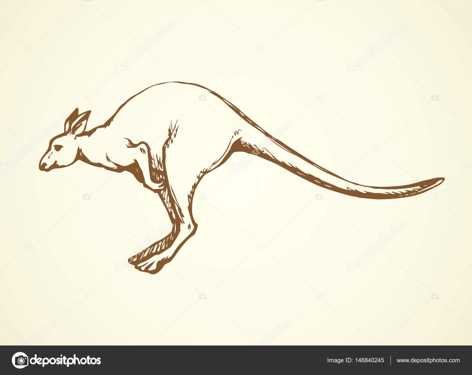 Dessin Kangourou kangourou. dessin vectoriel — image vectorielle marinka © #146840245