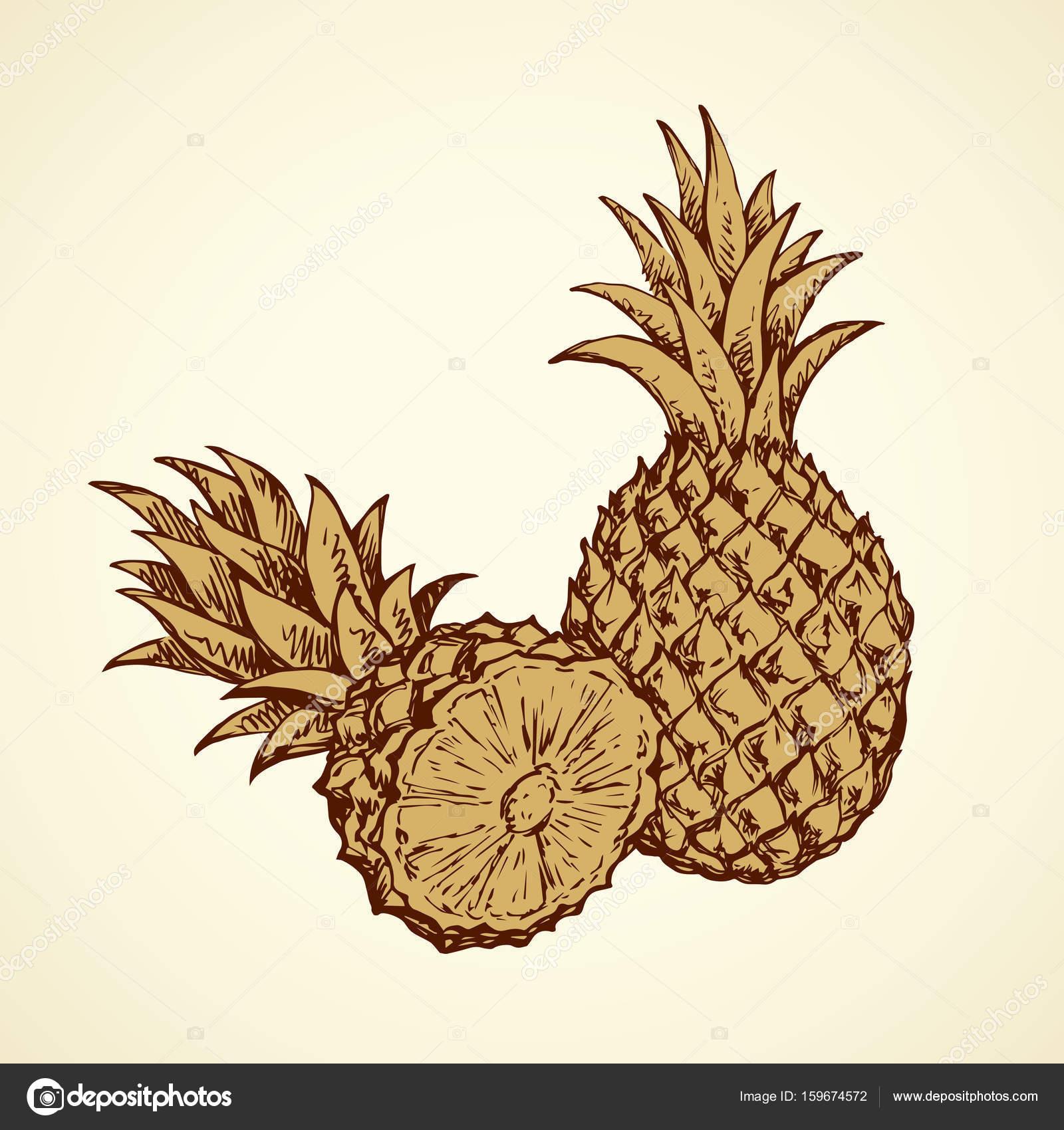 Ananas Rysunek ananas. wektor rysunek — grafika wektorowa © marinka #159674572
